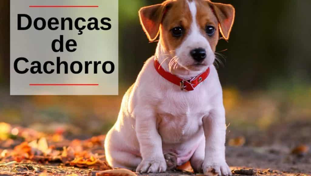 Doença de Cachorro
