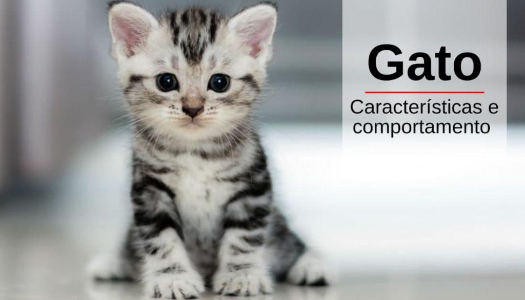 Gato - Características e Comportamento
