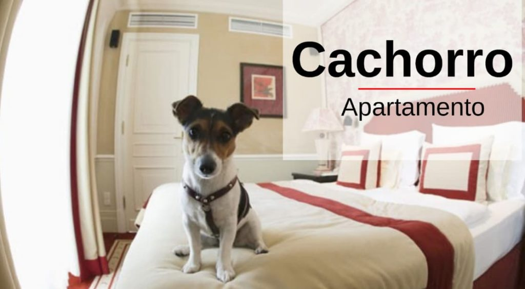 Cachorro vira lata para apartamento