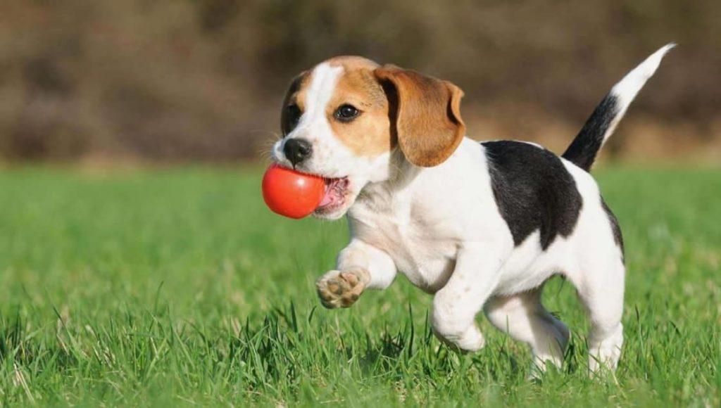 Recompensa no Adestramento de Cachorro