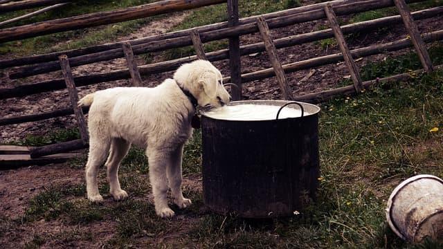 Cachorro Alérgico ou Intolerante