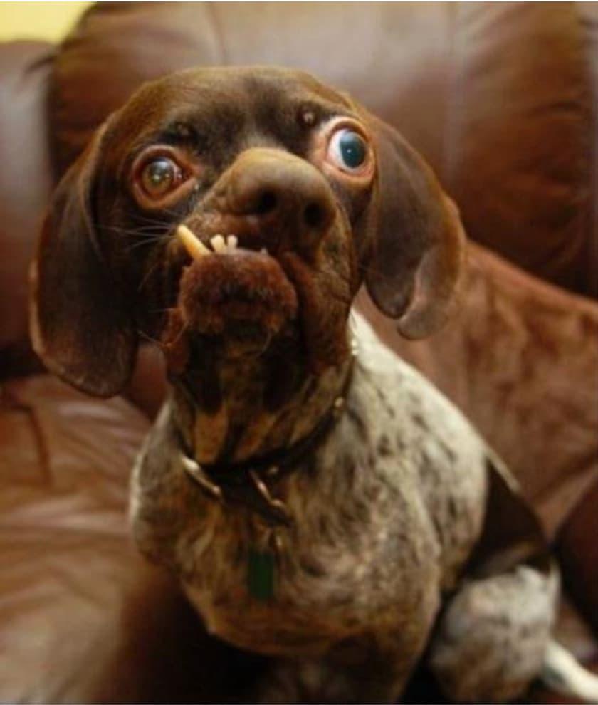 Cachorro mais feio do mundo