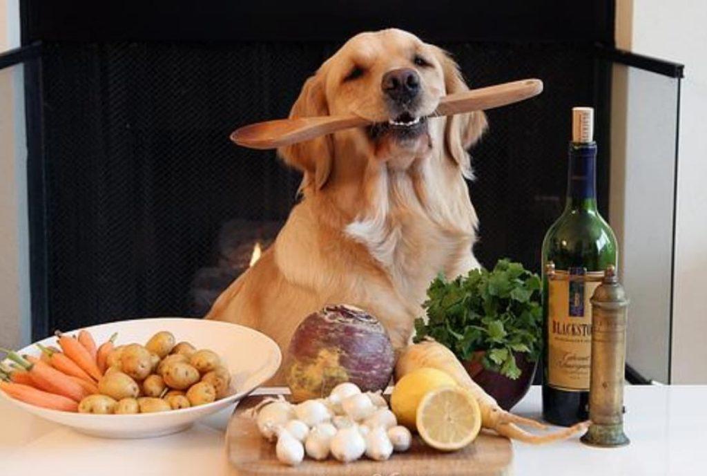 Vantagem X Desvantagem da Comida Natural Para Cachorro