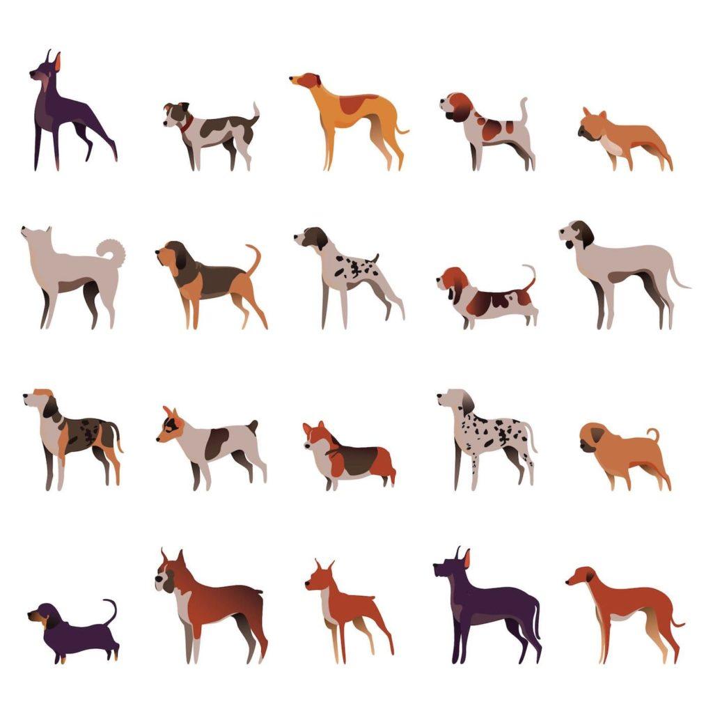 raças de cachorro
