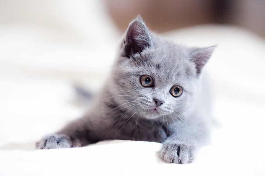 Sonhar com gato cinza